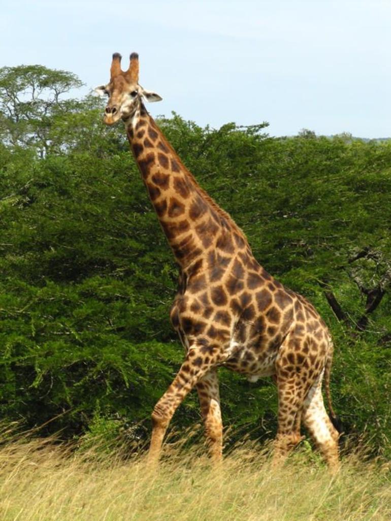 Hluhluwe Game Reserve - Durban