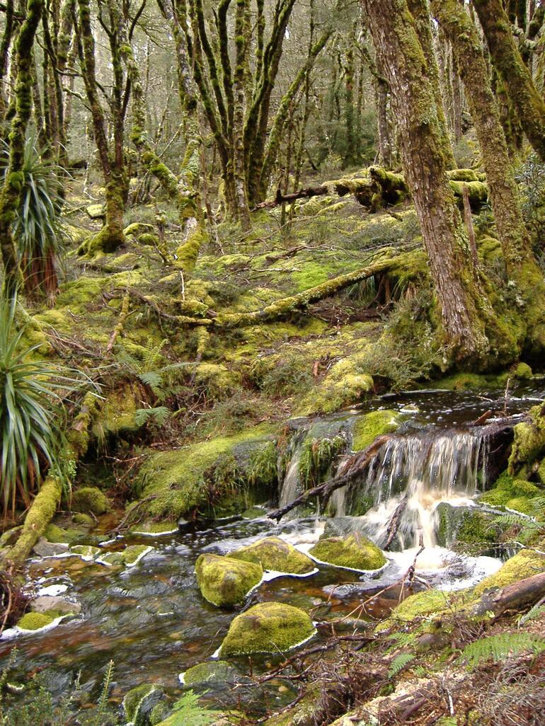 Moss and trees - Launceston