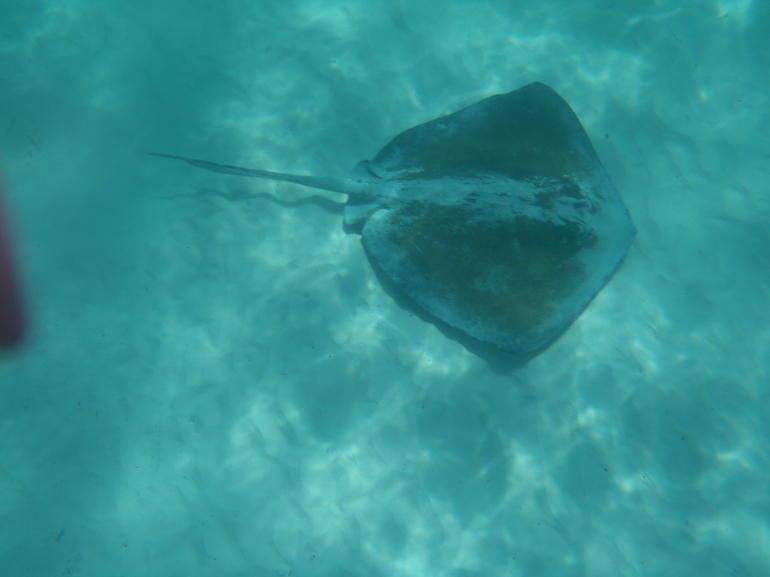 P5110056 - Punta Cana