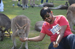 My husband taking selfie with kangaroos , aaritu - November 2015