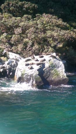 Seals on the rocks , Geoff P - December 2016
