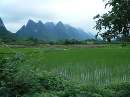View of the rice paddies - January 2013