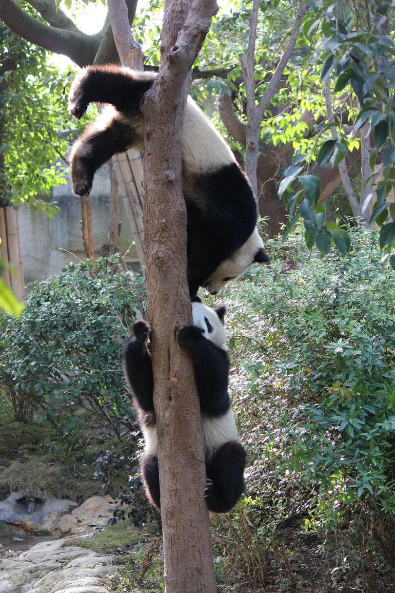 Tree - Chengdu
