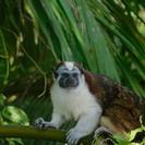 Gatun Lake Expedition, Gamboa, PANAMA