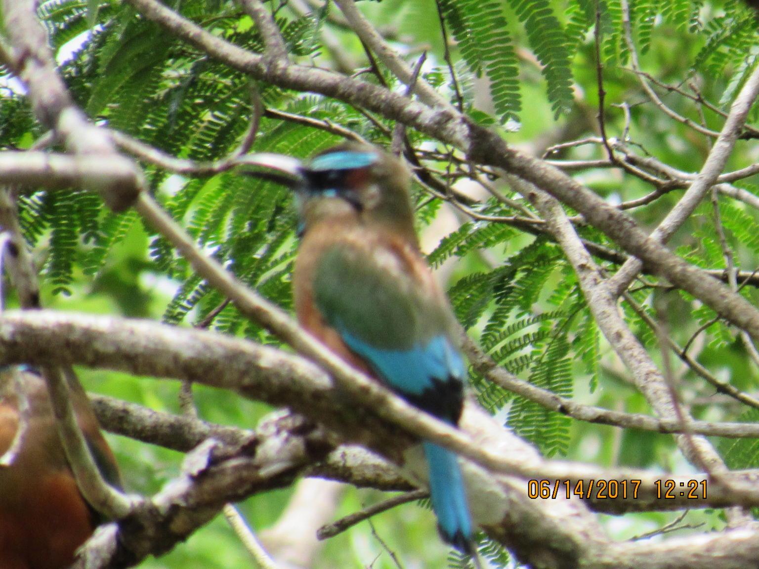 MÁS FOTOS, Escapada de un día por las Ruinas de Cobá, cenote Cho Ha, Tulum y Playa Paraíso