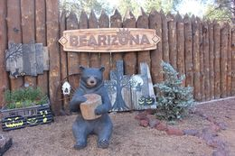 Welcome to Bearizona!, Bandit - October 2015