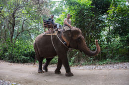 Our tour group riding elephants , David J - October 2015
