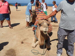 un dromadaire (ou comment prendre les marocains pour des abutis!!!) , pierre s - August 2014