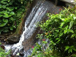 Majestic Water Falls of El Yunque! , Colleen H - January 2013