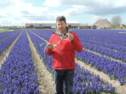 Flower grower explained the planting, growing, and harvesting of the flower bulbs for delivery all over the world. , James G - April 2015