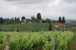 the vineyards., Frances - June 2010
