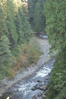 Taken from the suspension bridge. , Julie R - October 2013