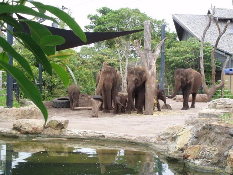 baby elephants - Sydney
