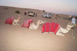camels , liina o - January 2014
