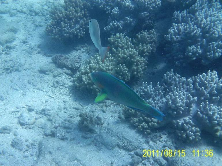 Fish4 - Cairns & the Tropical North