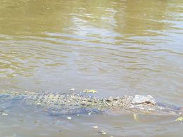 Captain Gregg brought us up close to gators, racoons, boars, egrets, turtles. Very amusing! , Awilda Q - August 2015