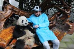 Baby panda holding, Bandit - December 2013
