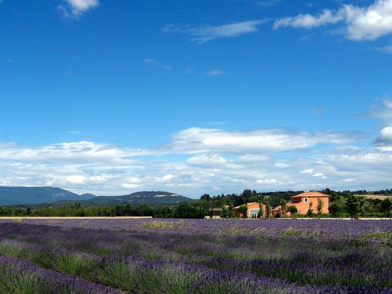 Lavender - Avignon