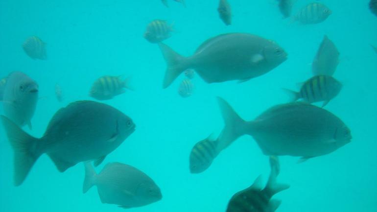 Under the sea - Grand Case