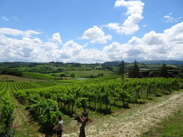 Wonderful vineyards! , Ana K - June 2016