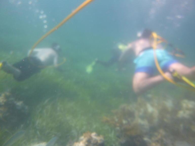 THREE ADVENTURES: Sailing Catamaran - Hooka Diving - Snorkeling