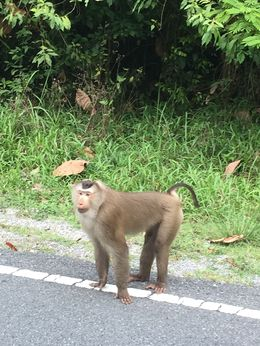 There was a little monkey business along the way. , MICHELLE PRICE P - March 2015