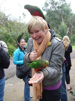 lots of parrots! , Karen B - June 2011