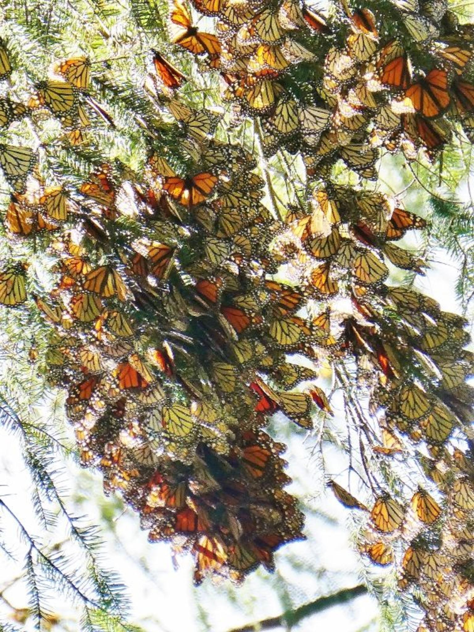 MAIS FOTOS, 7 Day-Monarch Butterfly Ecofriendly Tour in Mexico