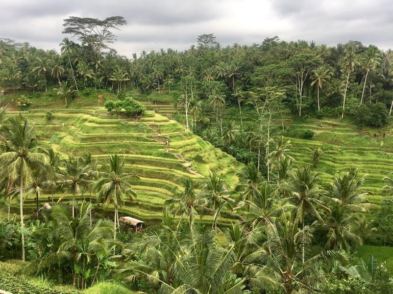 Best of Ubud : Private Customized Tour with Live Guide photo 4