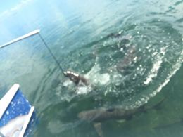 Great way to see the sharks in Key West! , Kekiduky - October 2015