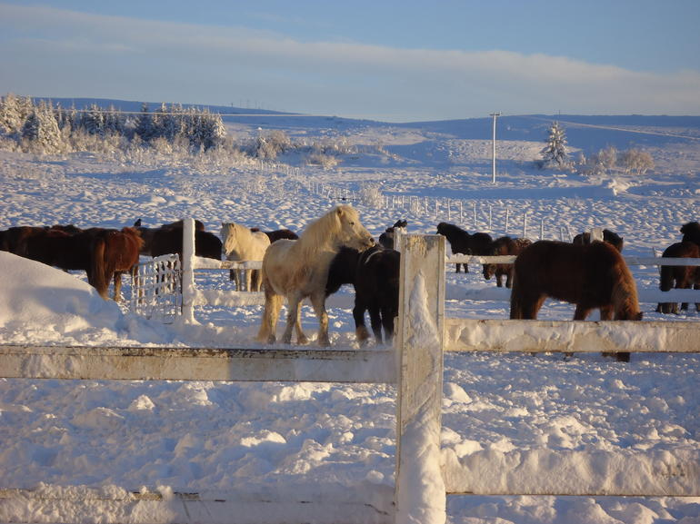 Viking Horse Riding and Golden Circle Tour from Reykjavik photo 34