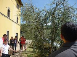 Our guide explained olive oil making , Amanda S B - June 2011