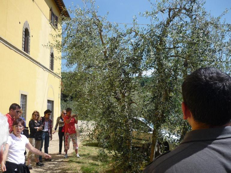 Olive Tree - Florence