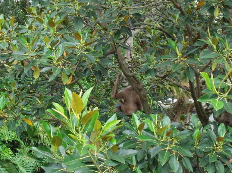 spot the monkey - Sydney