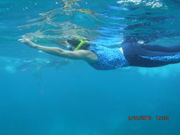 snorkeling the great barrier reef. , blessmyhome7 - October 2016