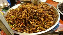 Grasshoppers Really good , richard G - October 2016