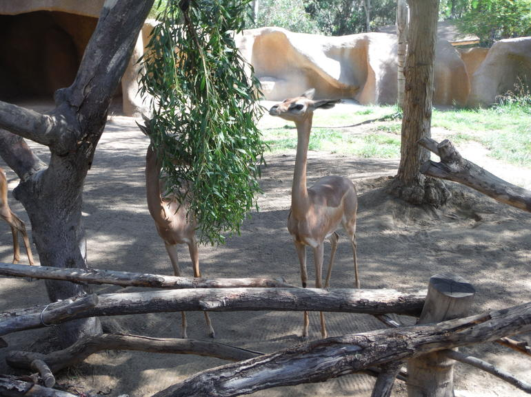 Skip the Line: San Diego Zoo Ticket photo 18