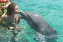 Audrey the dolphin - June 2015