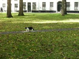 Cat disguised as a resident of the convent in Bruge., Mary Katherine M - October 2010