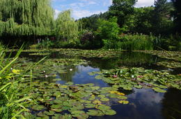 Monet's Japanese garden at Giverny , Marie W - July 2012