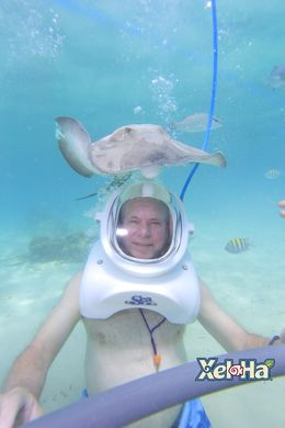 Sea Trek tour was awesome. Close encounters with Stingrays, and the beautiful fish swimming within arms length. , Lynn D - July 2016
