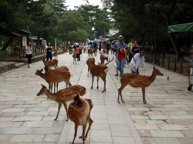 Todaiji Temple deers - Osaka