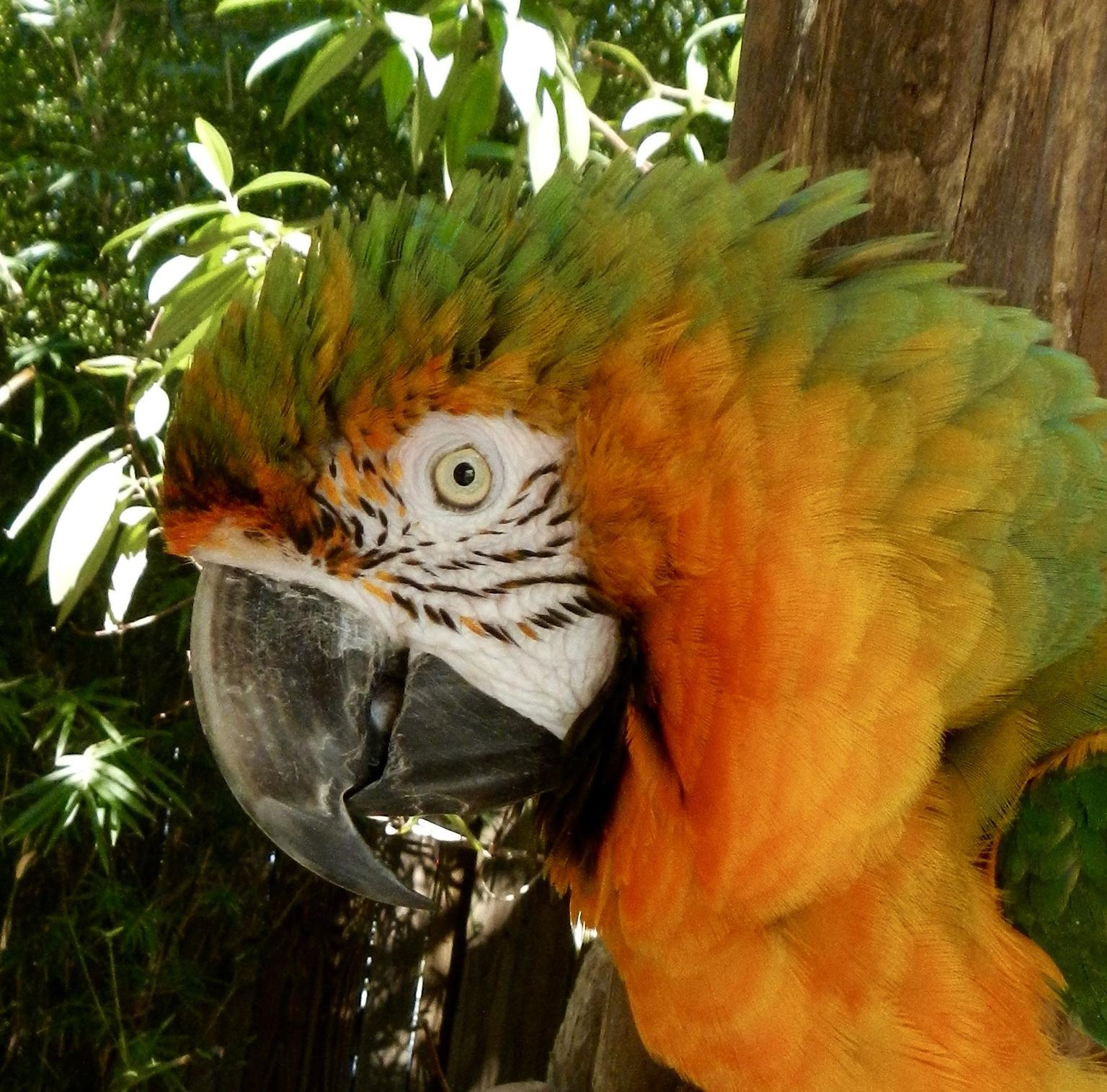 MÁS FOTOS, Florida Everglades Airboat Tour and Wild Florida Admission with Optional Lunch