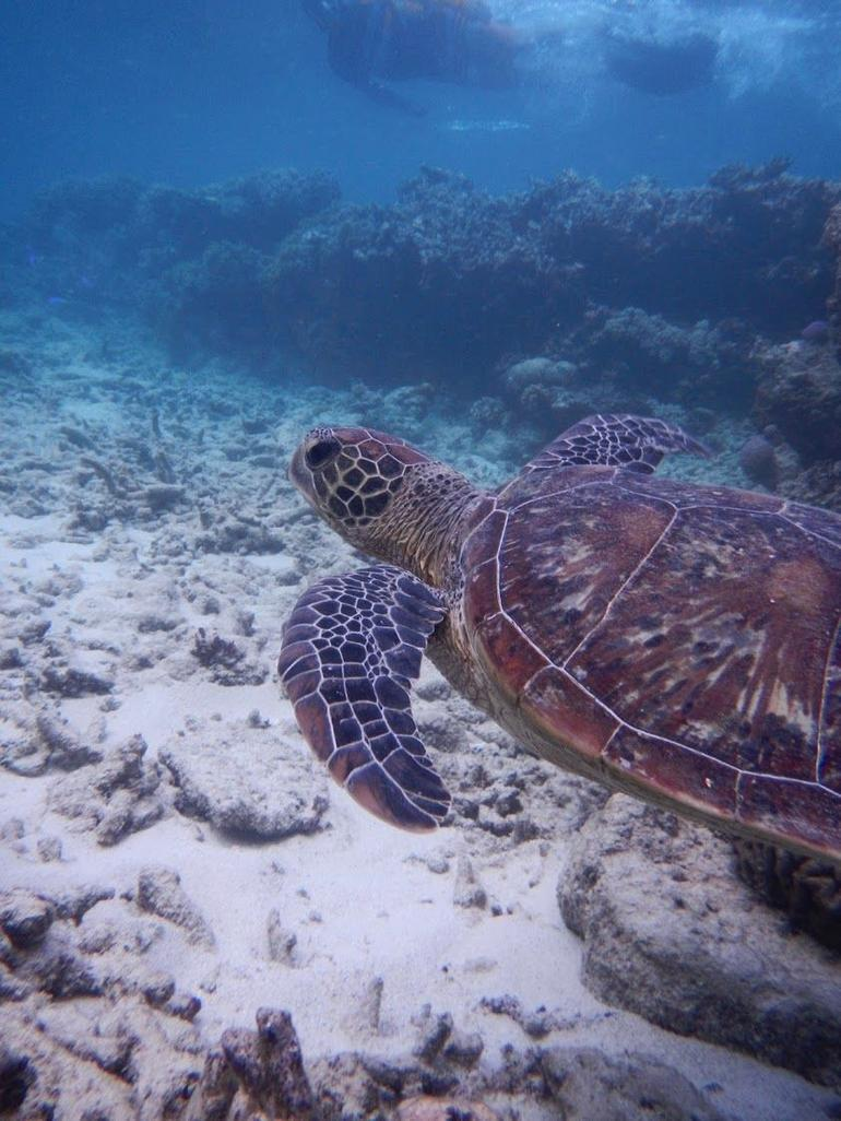 Great Barrier Reef Snorkeling and Diving Cruise from Cairns