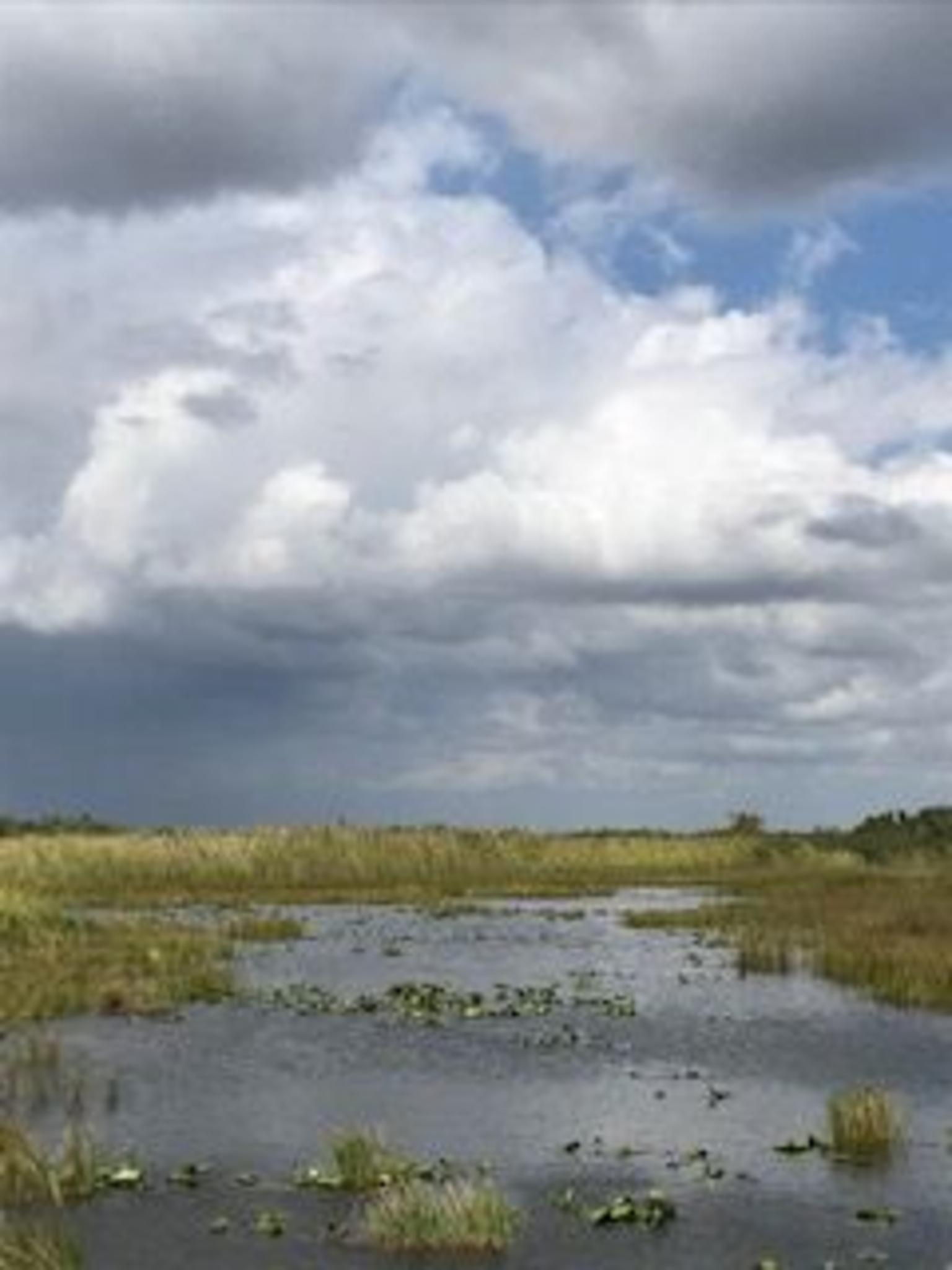 MAIS FOTOS, 1-Hour Air boat Ride and Nature Walk with Naturalist in Everglades National Park