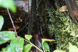 Saw a few small poisonous frogs , Ashley N - December 2014