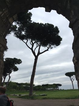 A photo of a roman pine surrounded by an aqua duct. , Sharon M - May 2015
