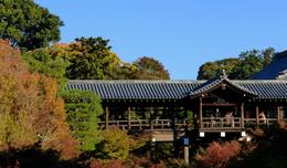 Tofukuji Zen Temple , Panda - November 2013