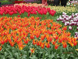 Some of the gorgeous flowers in the garden. The colors are so beautiful and vibrant. , vacation - May 2015