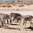 Safári pela Reserva de Vida Selvagem Aquila, saindo da Cidade do Cabo, Cidade do Cabo, África do Sul